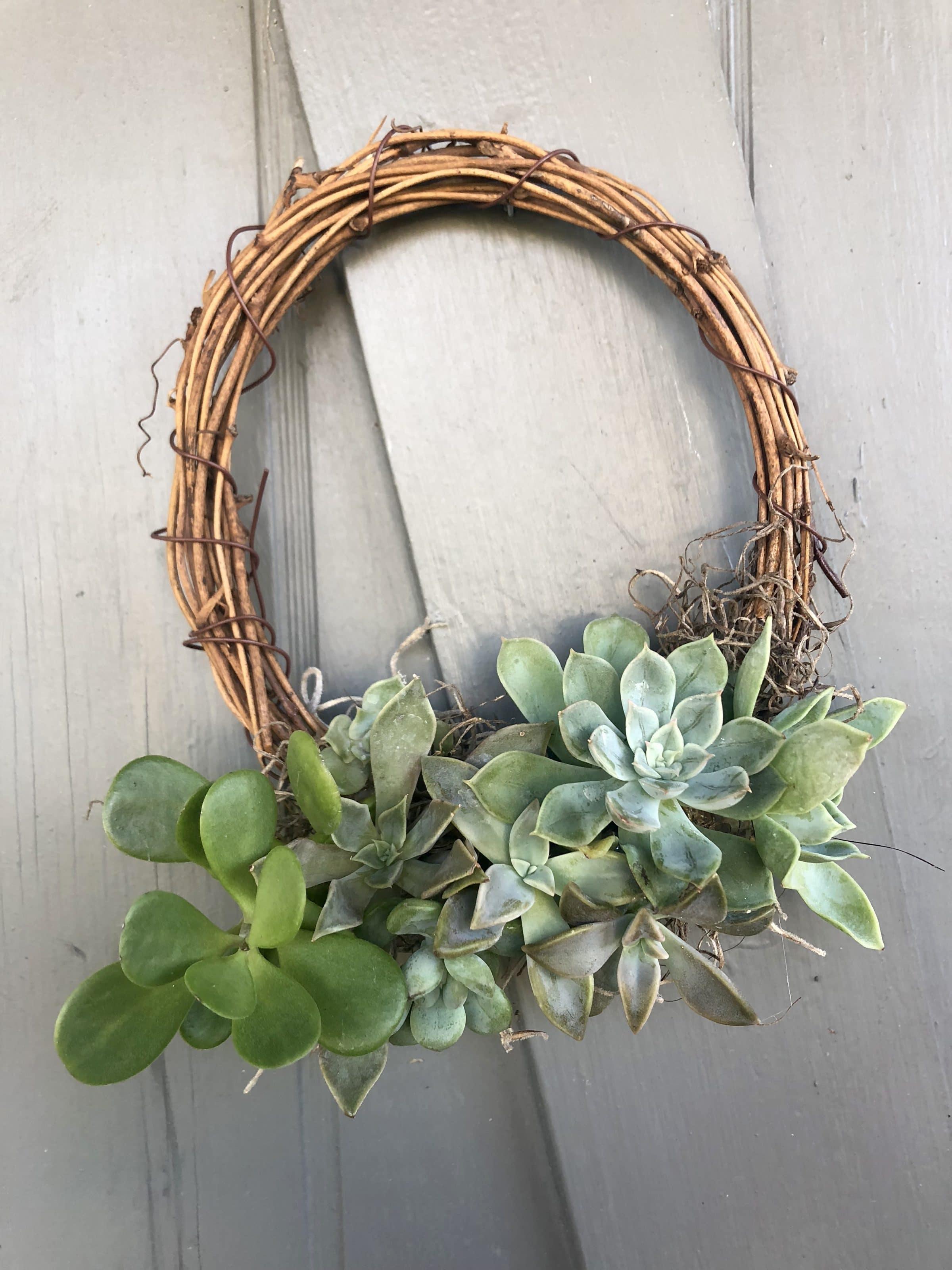 Diy Succulent Wreath Creative Grain Studio